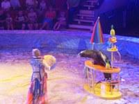 Дети из приемных семей посетили Магнитогорский цирк