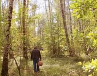 Правила поведения в лесу: как не заблудиться