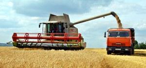 В хозяйствах района ведётся уборка зерновых