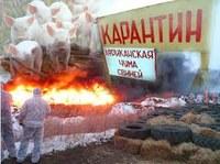 Внимание! В частном подворье п. Тимирязево Чебаркульского района диагностирована африканская чума свиней