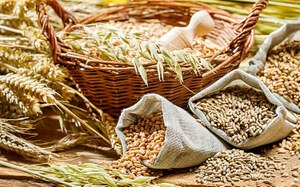 Изменение норм качества приёмки зерна